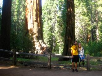 Kings Canyon Sequoias