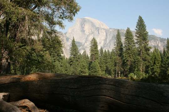Half Dome Oak Tree
