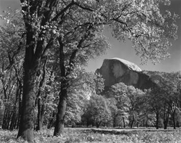 Ansel Adams Half Dome Oak Tree