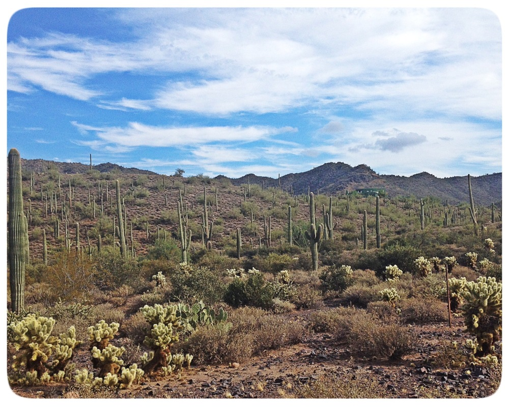 Saguaro Forest in Cave Creek.