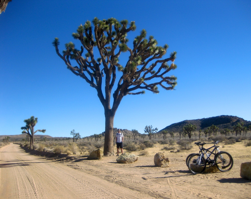 Mountain Bike Joshua Tree
