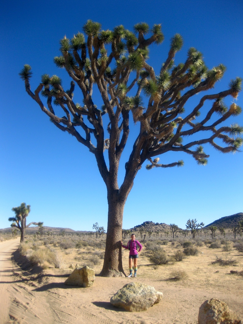 Joshua Tree National Park: The Story of Benjamin