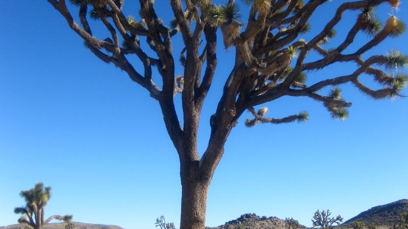 Joshua Tree National Park: The Story ofBenjamin