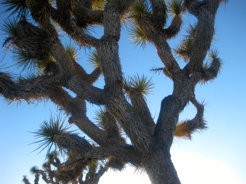 5 Things to do in Joshua Tree National Park