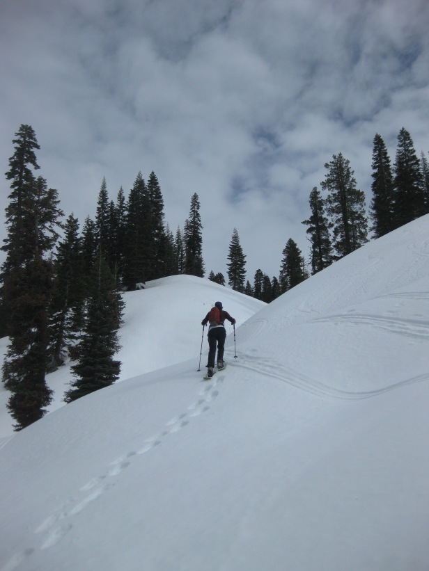 Blazing our own trail, again!