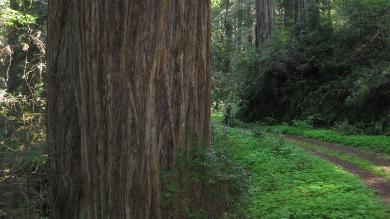 Bikepacking Redwood NationalPark